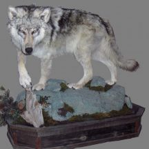 taxidermy