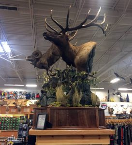 Idaho Award Winning Taxidermy